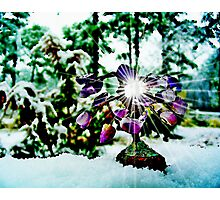 The Gem  Tree /  In Snow   Photographic Print