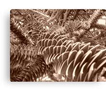 jardin des plantes Lille Canvas Print