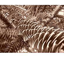 jardin des plantes Lille Photographic Print