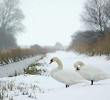 White Delight by James Stevens