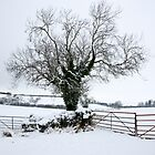 my tree by chalkypilot