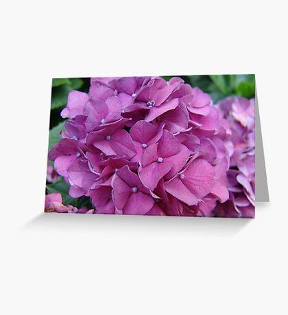 Violet Hydrangeas Greeting Card