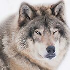 ..the wink of a wolf..... by John44