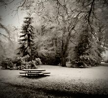 Cold Park by Paul Campbell