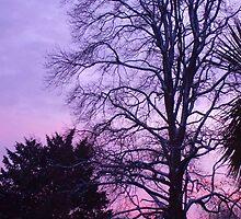 Sunset by Emelia HVS