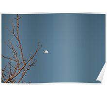 Tree Limb Moon Poster