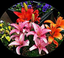 Colourful Lilies and Pansies - Oval Vignette by kathrynsgallery