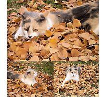 autumn cat Photographic Print