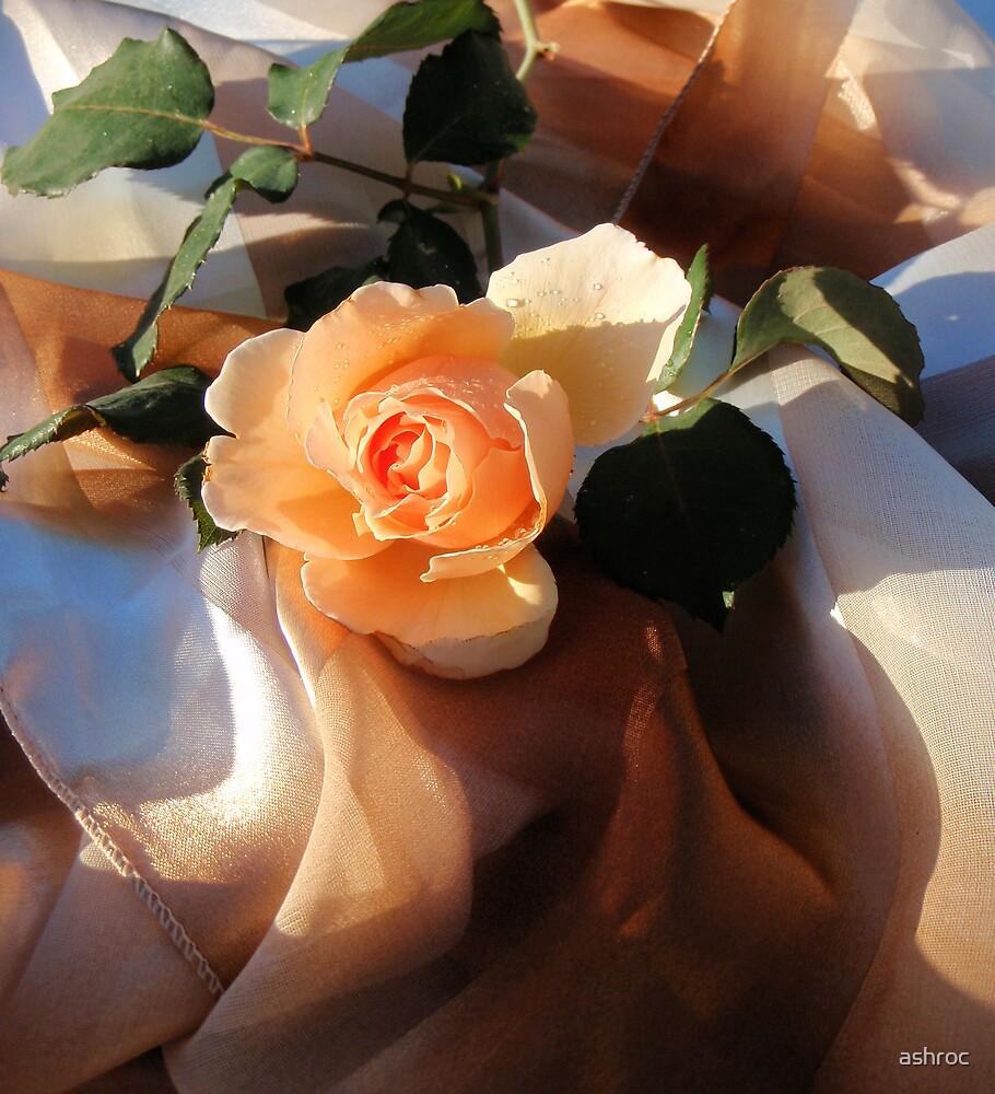 i love orange roses by ashroc
