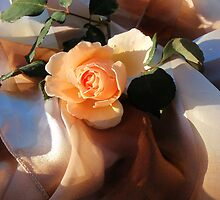 i love orange roses by ashroc