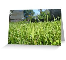 Grass view Greeting Card