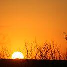 Orange Glow by Cheyenne