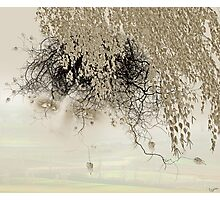 Gray Photographic Print