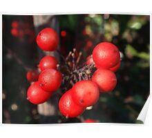 Merry Berries Poster