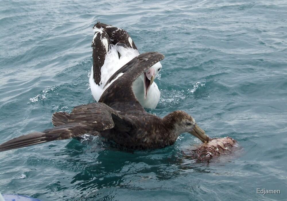 Albatross Assault by Edjamen