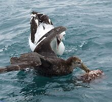 Albatross Assault by Edjamen