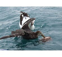 Albatross Assault Photographic Print