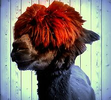 Odie the Alpaca, With a Spot of Color by Darciann Samples