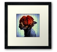 Odie the Alpaca, With a Spot of Color Framed Print