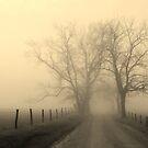 foggy lane at sunrise by dc witmer