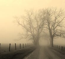 foggy lane at sunrise by dc witmer
