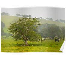Mist at Jamberoo Poster