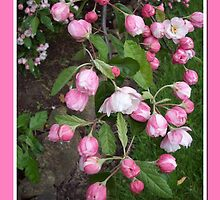 Pink Rosebud Cascade by Eleanor Wylie