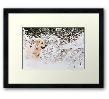 Sheer Joy Framed Print