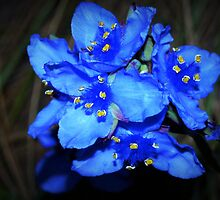Blue beauties by ♥⊱ B. Randi Bailey