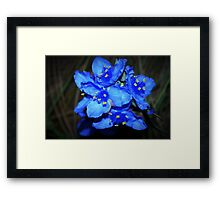 Blue beauties Framed Print