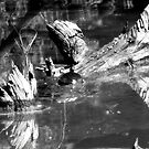 Turtle Black&White by TLWhite