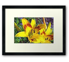Raindrops on daylilies Framed Print