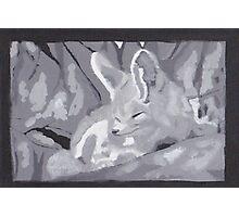 Grey Scale Fennec Fox Photographic Print