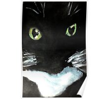 Tuxedo Kitty Poster