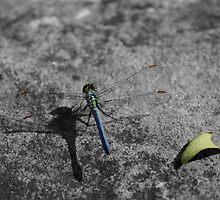 Dragonfly II by Cassy Greenawalt