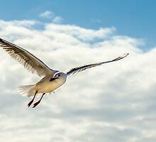 Seagull  by Ann Pinnock
