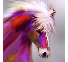 Horse of color Photographic Print