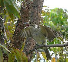 Juvenile Butcher Bird by smallan