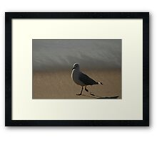 Another #$*&@!^  Seagull Shot Framed Print