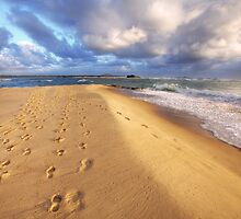 Footsteps in the Sand-1644 by Barbara Harris
