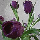 Pretty Purple Tulips by MichelleR