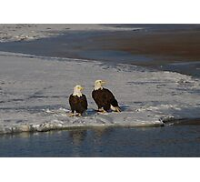 Pair of Bald Eagles Waiting For Breakfast Photographic Print