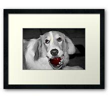 thief dog Framed Print