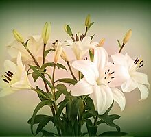 Lilies 3 by Bette Devine