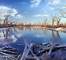 Lyrup Flats Log Jam by Steve Chapple