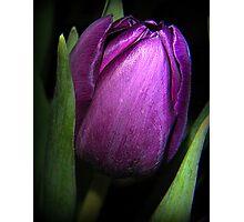 Purple Satin Photographic Print