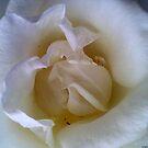 White Beauty by saseoche