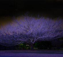 Purple Tree by Ann Pinnock