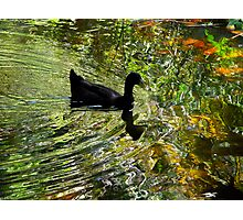 Silky waters Photographic Print