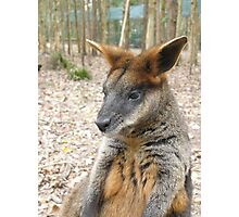 I wonna be a wallaby, I am Photographic Print